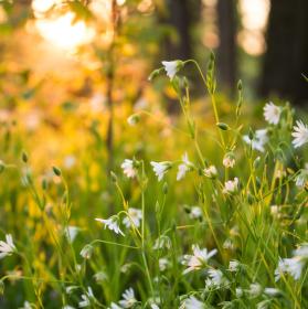 V lese při západu