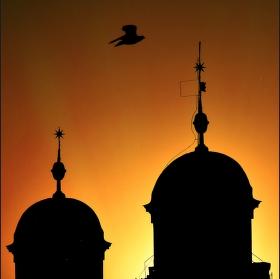 Pták a věže