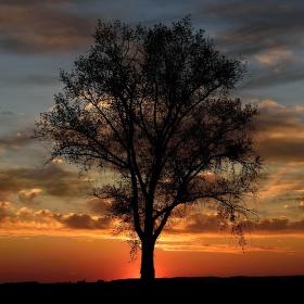 západ za stromem