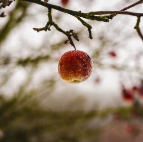 Zmrzlé jablko