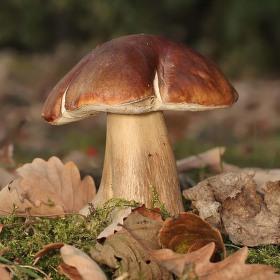 král houbařské sezóny