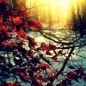 Podzim vs. Zima