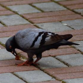 Ochutnávka kuřátka