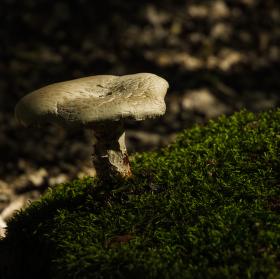 houba na výsluní