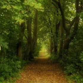 Cesta mezi stromy