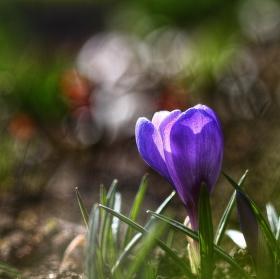 Jarní ...