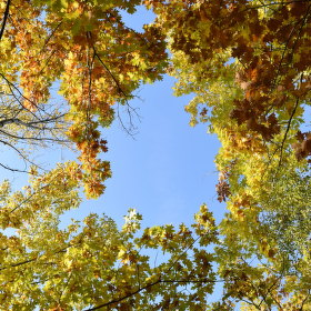 Podzimní koruny stromů