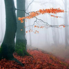 ...podzim v horách Krušných