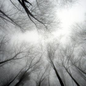 Mlha nad hlavou