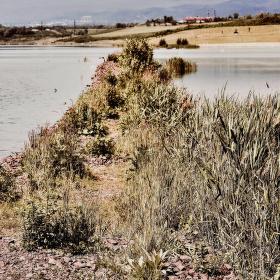 Reprodukce jezera