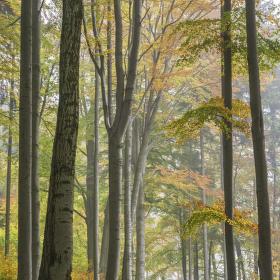 Pod stromy v podzimním hávu