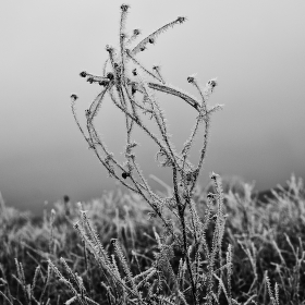 Zimní..