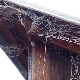 Ojíněná pavučina