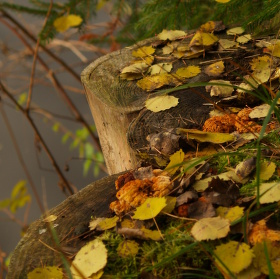 Zátiší podzimu.
