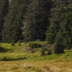 Šumavské lesy.