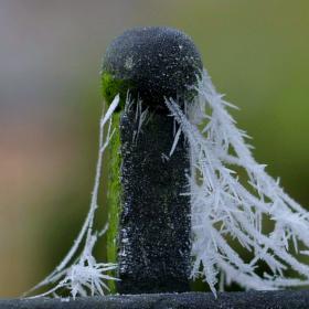 pavučiny mrazivé