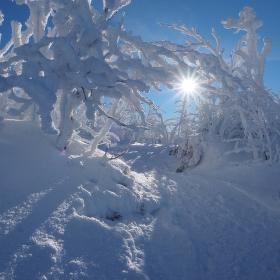 Průsvit slunce v zimě.