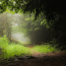 Mlžný les
