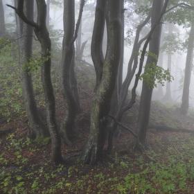Tvárný les pod pokličkou.