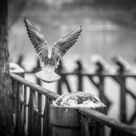 Anděl řeky