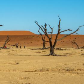 V krajině mrtvých stromů