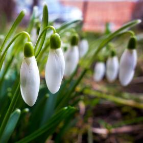 Jarní pozdravení