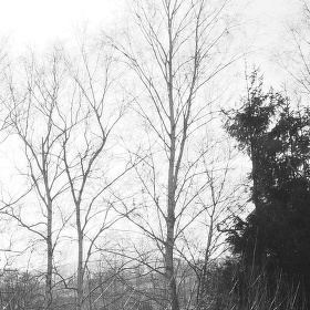 Černobílá zahrada 1