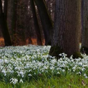Jaro v lese