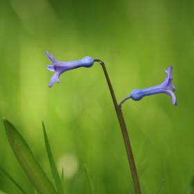 Jaro v trávě