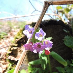 Květinka v lese