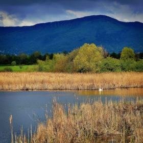 Na Zalužanském rybníku