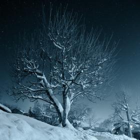 Jablkoň v zimní záři hvězd.