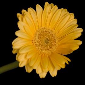Žlutá kytka