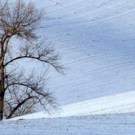 V Moravských polých