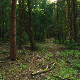 Samota lesa