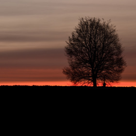 Tehovská lípa za východu slunce