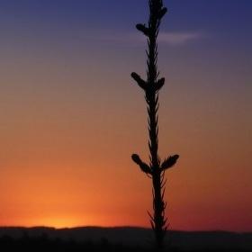 Terminál smrčku a západ slunce