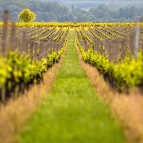 Vinohradem