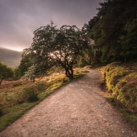 Ráno v Glendalough  II