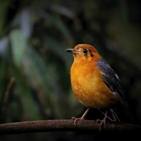 Ptáče