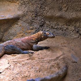 Na výlětě v zoo