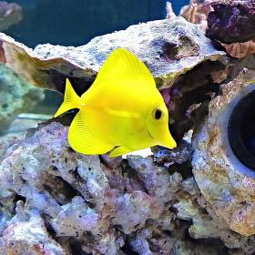 Žluté pohlazení