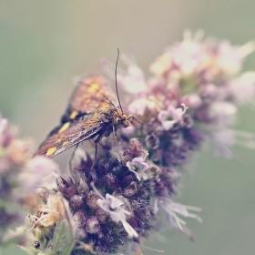 Letem za květem