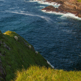 Pastva na útesech
