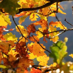 Nic než podzim