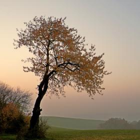 Valašská bonsai...