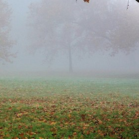 V rannej hmle.