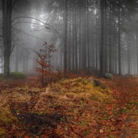 Podzimní samota