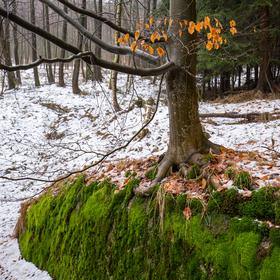 Silvestrovská lesní nálada