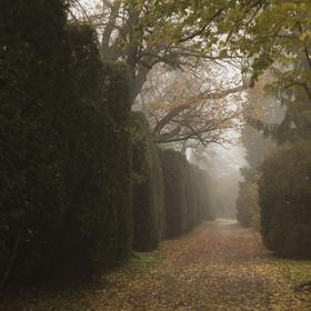 Podzimní mlhavé ráno